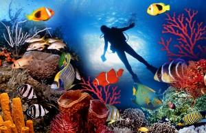 Malediven duiken