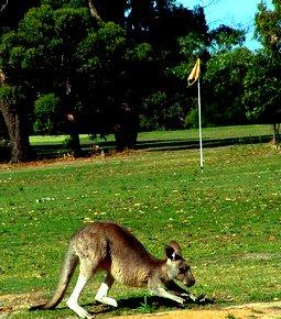huwelijksreis australie